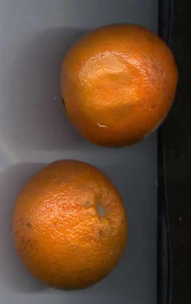 24 - Orange