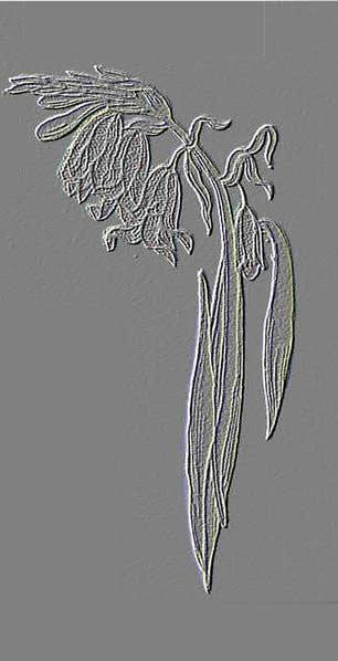 9 - Hyacinthe