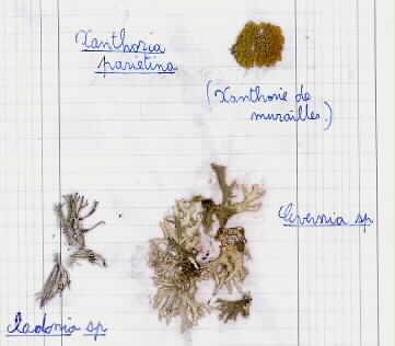 17 - Lichen