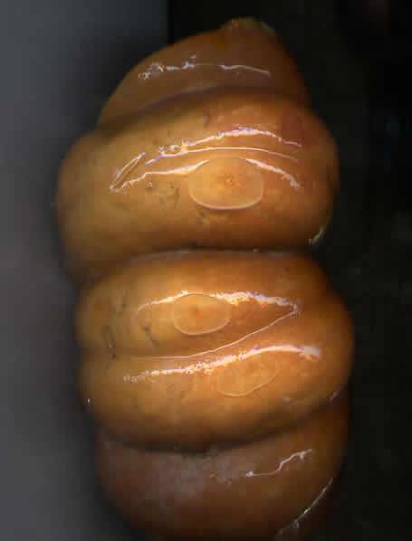 17 - Citrouille